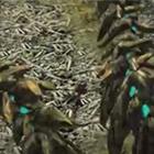 骸龍·オストガロア