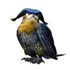 貓頭鷹·ホロロホルル