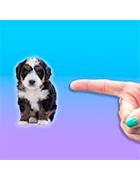 別碰我的狗
