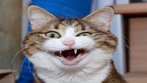 会翘脚的猫咪邪恶表情图集