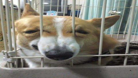 突然驚覺自己在獸醫院的狗狗圖集