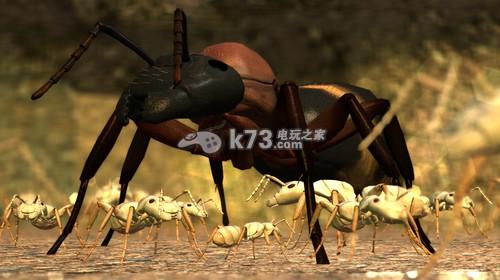 动物蚂蚁般东西图片