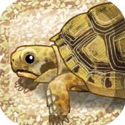 治愈的海龟育成ios中文版下载v1.1