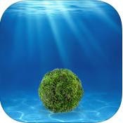 绿球藻育成 v1.0.0 安卓版下载