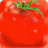 西红柿播放器