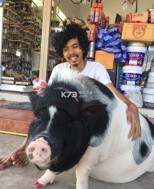"""4月30日,一名泰国男子在Facebook上分享了他所养的""""宠物猪""""的照片,随后迅速萌翻了整个网络,网友们纷纷表示:""""你们俩好有爱哦。。。。。。"""" 据了解,这是一头母猪,男主人已经养了它将近1年时间,并培养出了深厚的感情,天天都抱着它睡觉。完全把它当成女朋友一样来养了。给它吃最爱的面包、炒饭和炒面,去到哪里都把它带上。 买回来后,小猪的重量是天天在疯涨,有时可以当成枕头来用。这名男子还表示,将要把它养到老死为止。这头母猪上辈子该积了多大的功德啊"""