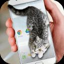 可爱猫动态屏幕手机版下载v1.0