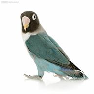 老鸟宝盒 v1.0 app下载