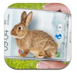 手机里的小兔子恶搞更新版下载v1.3
