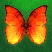 消灭蝴蝶游戏下载