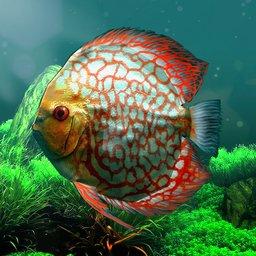 热带鱼水族馆中文版下载v1.0