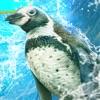 企鹅幻灯片赛车 v1.0 游戏下载